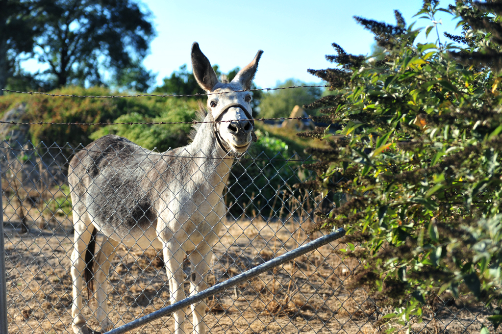 happy donkey_8841